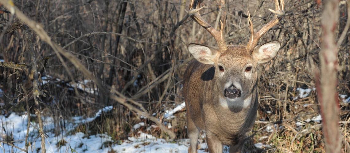 hunt-lease-home-slider-5